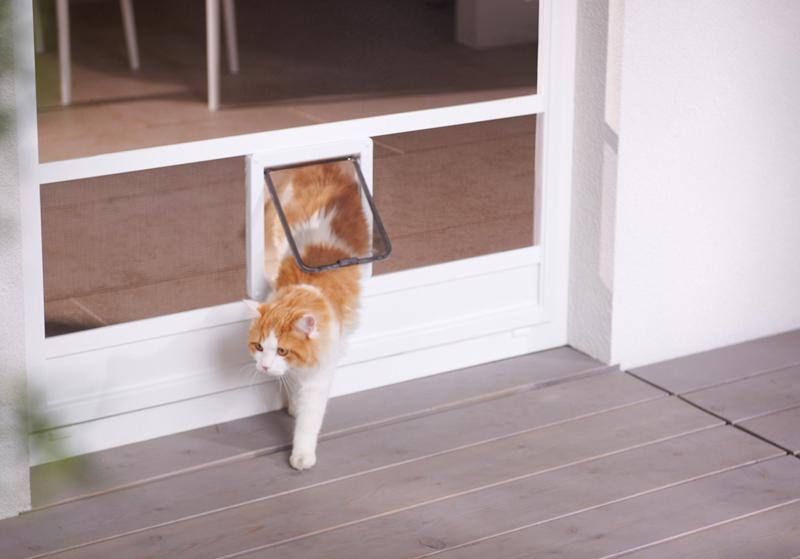 Katze verlässt Wohnung durch einen Katzen- Hundedurchgang